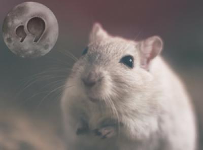 Hamsters Full Moon